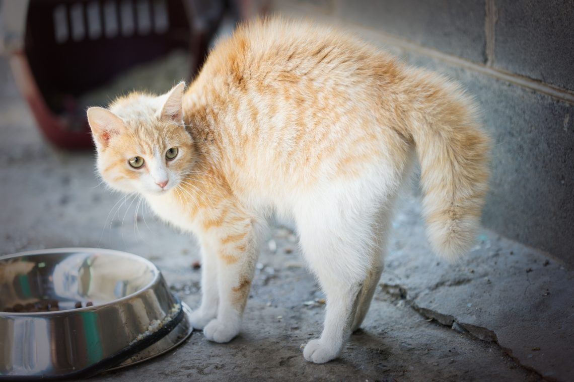 frightened cat by food bowl