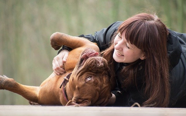 Girl playing with a Dogue De Bordeaux