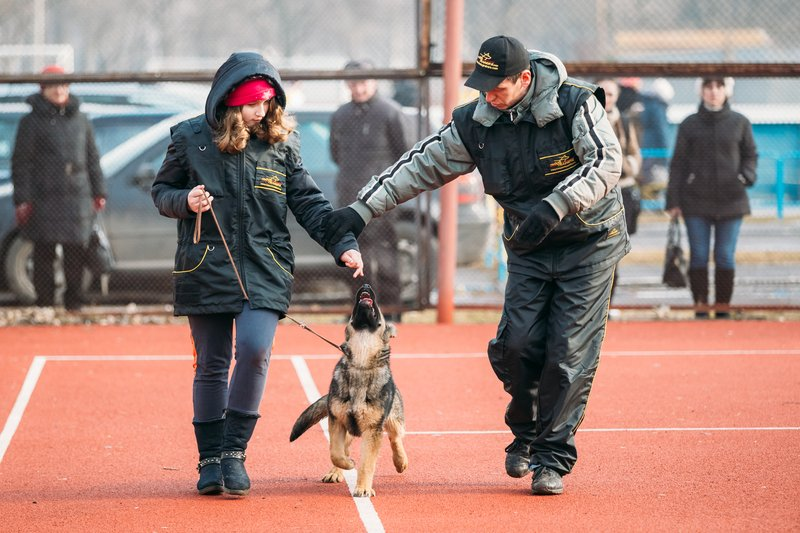 dog trainer teaching an owner and a german shepherd puppy