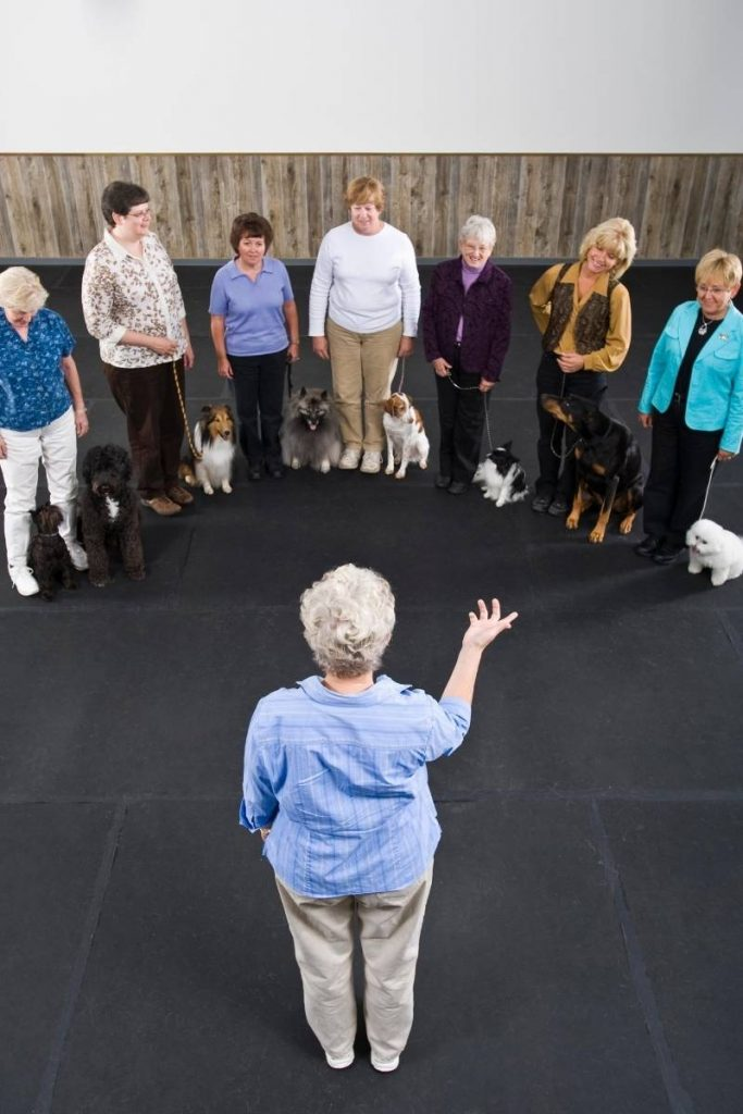 group dog training class with instructor