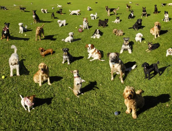 many-dogs-at-a-park