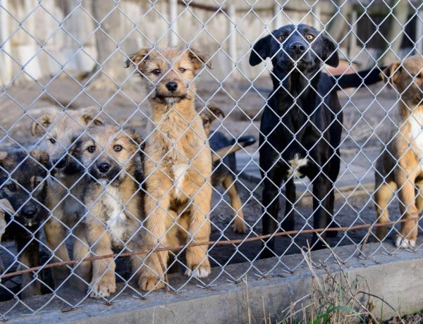 rescue dogs behind a fence in a shelter