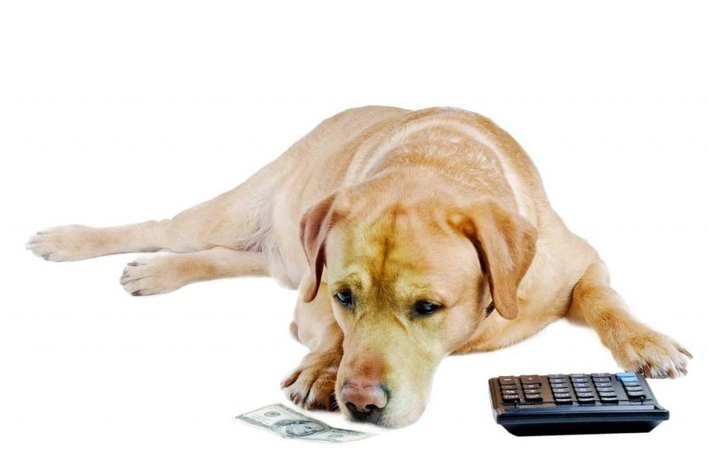 a dog lying down with a calculator and money illustrating the cost of a rescue dog