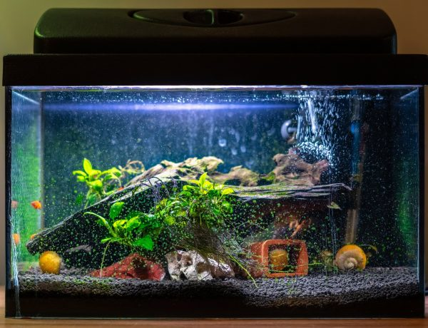 fish aquarium with light one
