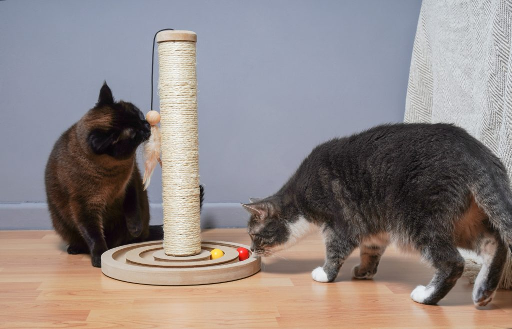 Two cats that are learning to play together with a toy.